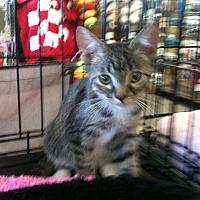 Adopt A Pet :: Ranger - Cerritos, CA