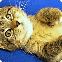 Adopt A Pet :: Pop - Toledo, OH