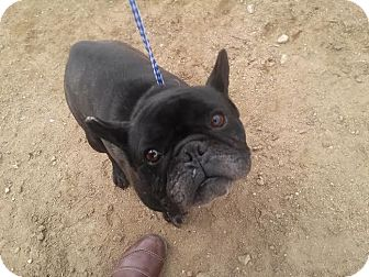 Big Dog Rescue San Fernando Valley