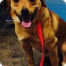 Adopt A Pet :: ZACH