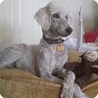 Adopt A Pet :: Anna - Buena Park, CA