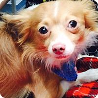 Adopt A Pet :: Jimmy - Oak Ridge, NJ