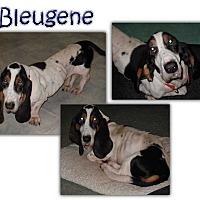 Adopt A Pet :: Bleugene - Marietta, GA