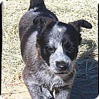 Adopt A Pet :: Evie - Johnson City, TX