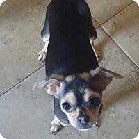 Adopt A Pet :: WILOMENA - Inland Empire, CA
