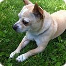 Adopt A Pet :: Flint