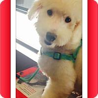 Adopt A Pet :: Adopted!! Manny - S. TX - Tulsa, OK