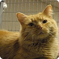 Adopt A Pet :: Rusty - Winchendon, MA