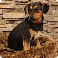 Adopt A Pet :: Tina - Waldorf, MD