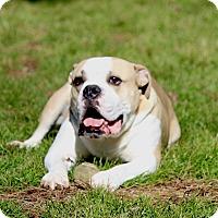 Adopt A Pet :: Max - Alpharetta, GA