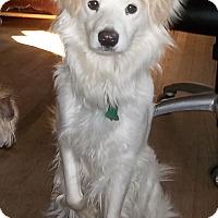 Adopt A Pet :: Hanna - Memphis, TN