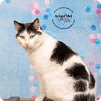 Adopt A Pet :: Sara - Cincinnati, OH