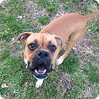Adopt A Pet :: Ava - Wilmington, NC