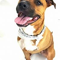 Adopt A Pet :: Bixby - Sylvania, OH