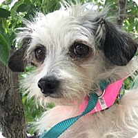 Adopt A Pet :: Danny-ADOPTION PENDING - Boulder, CO