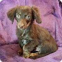 Adopt A Pet :: Pancho - Lawrenceville, GA