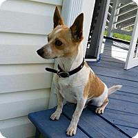 Adopt A Pet :: Russ - Potomac, MD
