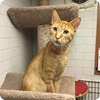 Adopt A Pet :: Fernando - New York, NY