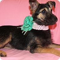 Adopt A Pet :: Ariel (has been adopted) - Rochester, NY