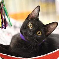 Adopt A Pet :: Dahlia - Sacramento, CA