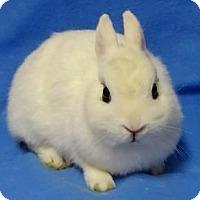 Adopt A Pet :: Ava - Woburn, MA