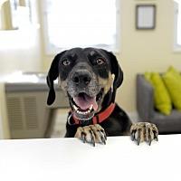 Hound (Unknown Type) Mix Dog for adoption in Charlotte, North Carolina - Bella Rae