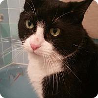 Adopt A Pet :: Thomas - Yorba Linda, CA