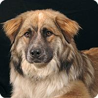 Adopt A Pet :: Buddy - Sudbury, MA