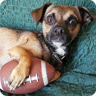 Chihuahua/Pug Mix Dog for adoption in Yucaipa, California - Larry