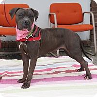 Adopt A Pet :: Sage - Mt Vernon, NY