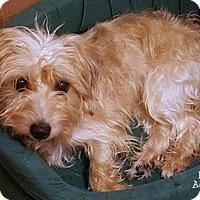 Adopt A Pet :: Pixie - Conroe, TX