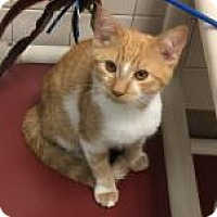 Adopt A Pet :: Sonny 1153 - Columbus, GA