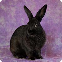 Adopt A Pet :: Cricket - Wilmington, NC