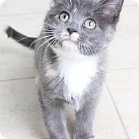 Adopt A Pet :: Roxie C160352: PENDING ADOPTION - Edina, MN