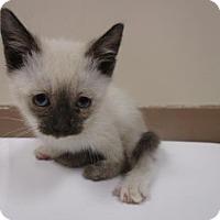 Adopt A Pet :: STEGOSAURUS - Reno, NV