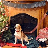 Adopt A Pet :: Delilah - Huntington, IN