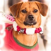 Adopt A Pet :: Dallas - Hermitage, TN