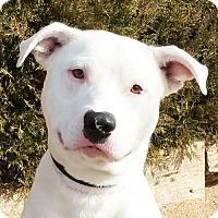 Adopt A Pet :: Playful Mr Padre - Albuquerque, NM