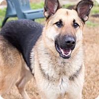 Adopt A Pet :: Graham - Walnut Creek, CA