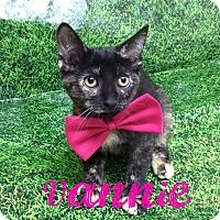 Adopt A Pet :: Vannie - Miami Shores, FL