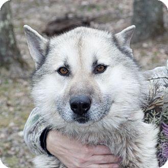 Koda   Adopted Dog   7993   New Martinsville, WV   German ...