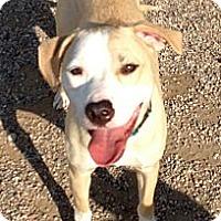 Adopt A Pet :: Rascal - Marion, WI