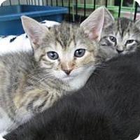 Adopt A Pet :: Dinky & Link - Island Park, NY