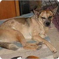 Adopt A Pet :: Kalua - Phoenix, AZ