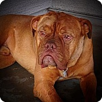 Adopt A Pet :: Kimbo-Adoption Pending - Phoenix, AZ