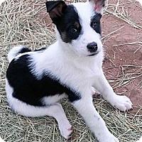 Adopt A Pet :: Zoey - Waller, TX