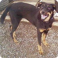 Adopt A Pet :: Ella - Toledo, OH