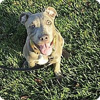 Adopt A Pet :: Olive - Vista, CA