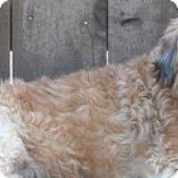 Adopt A Pet :: Dora - MEET HER!! - Norwalk, CT