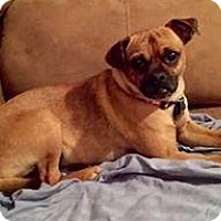 Adopt A Pet :: Ozzy - North Richland Hills, TX